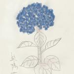 紫陽花72