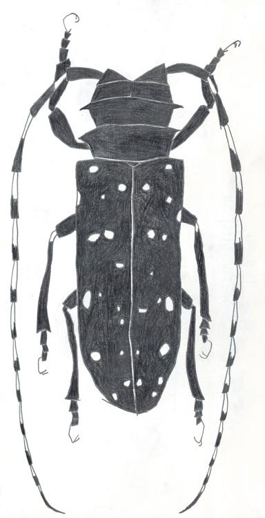 ゴマダラカミキリムシ