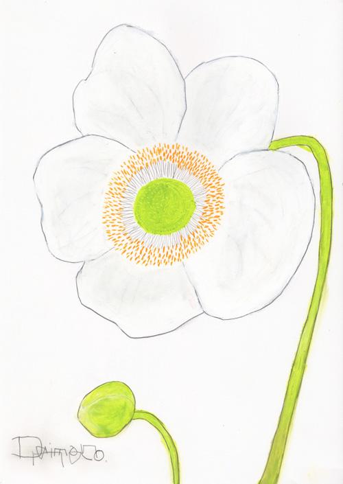 秋明菊72